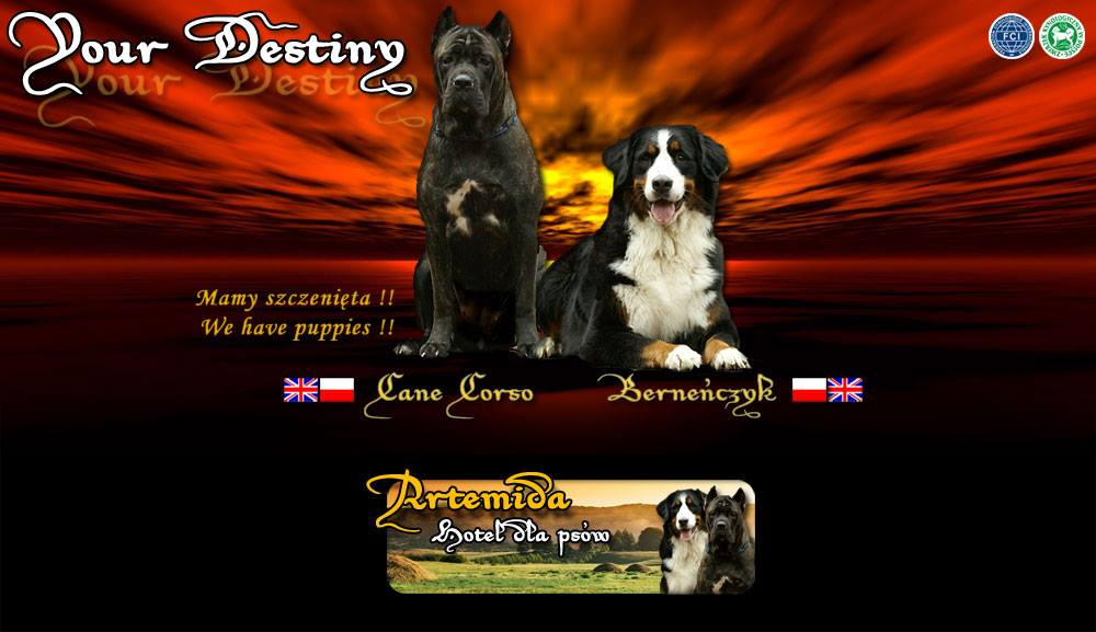 Cane corso kennel Your Destiny FCI